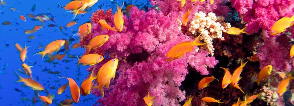 Récif de corail Ile Maurice