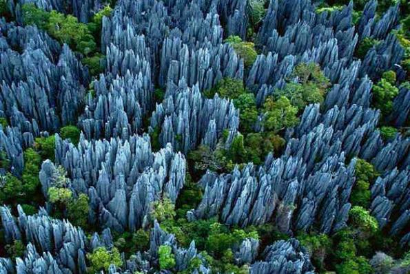 Madagascar rock forest